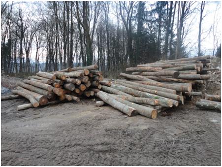 bukova drva 1